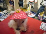 犬用サンバイザー