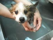 SOY入浴