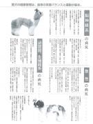 sheezu6.jpg