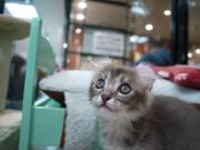 CAT1305
