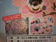 犬ごころの桜の木を満開にしよう!③
