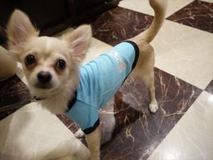 犬ごころTシャツ クール
