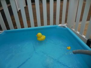 本日よりちびプール注水!