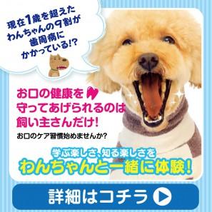 dental_1040x1040
