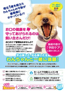 表dentalA5out_cc